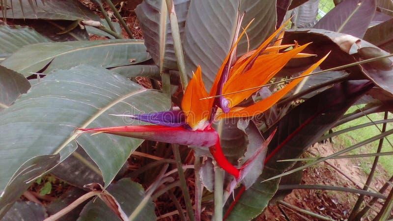 Aire libre exótico de la flor fotos de archivo libres de regalías