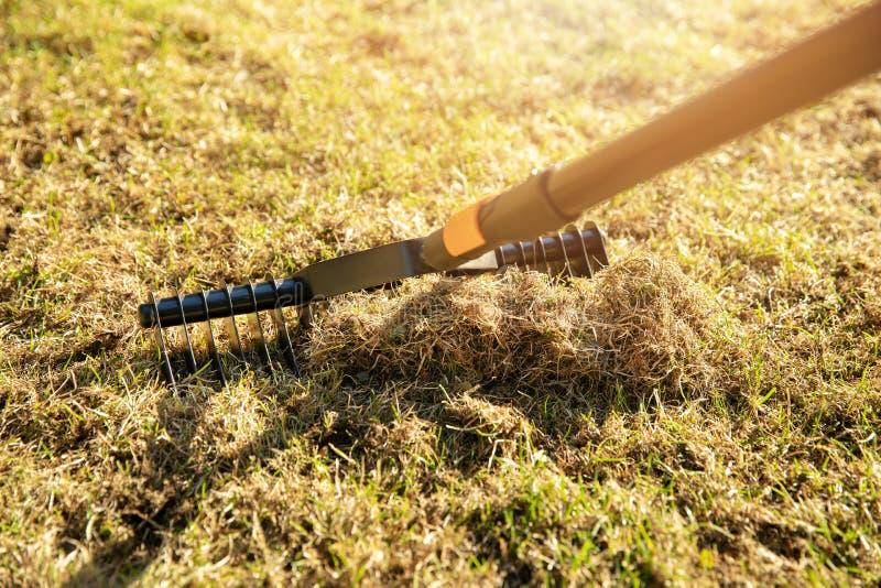 Aireación del césped del jardín con el rastrillo del escarificador foto de archivo