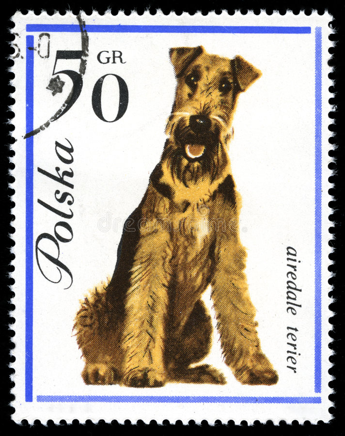 Download Airedale Terier In A Vintage, Canceled Post Stamp Stock Image - Image: 4882031