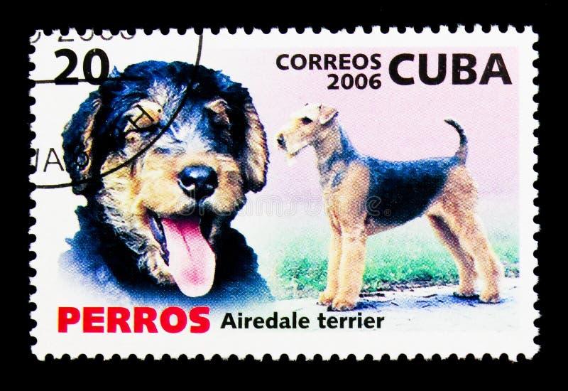 Airedaleterrier Terrier (familiaris för Canislupus), hundkapplöpningserie, circa 200 royaltyfri foto