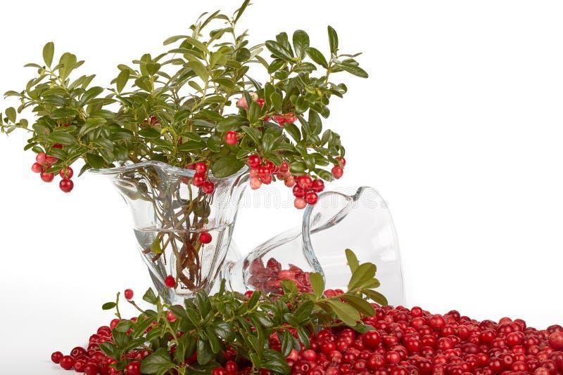Airela fresca com folhas verdes foto de stock royalty free
