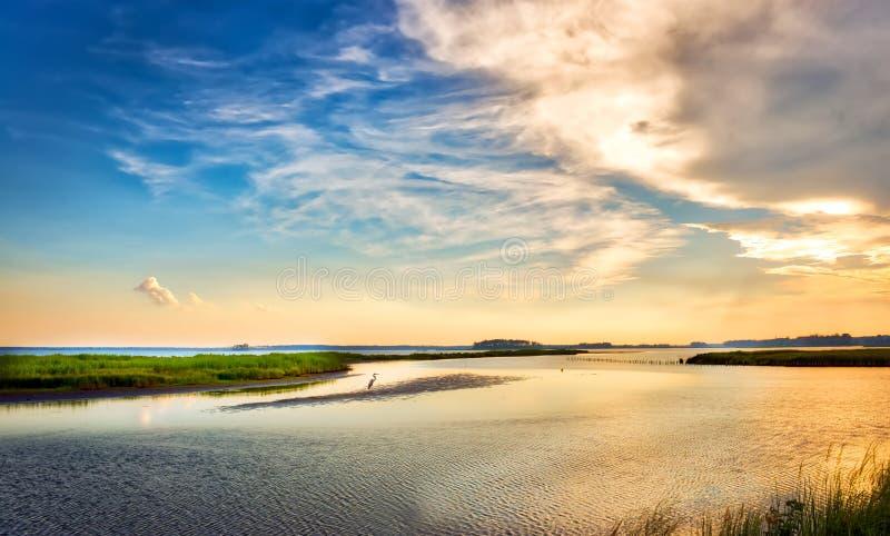 Airone di grande blu che gode di un tramonto dorato della baia di Chesapeake immagini stock libere da diritti