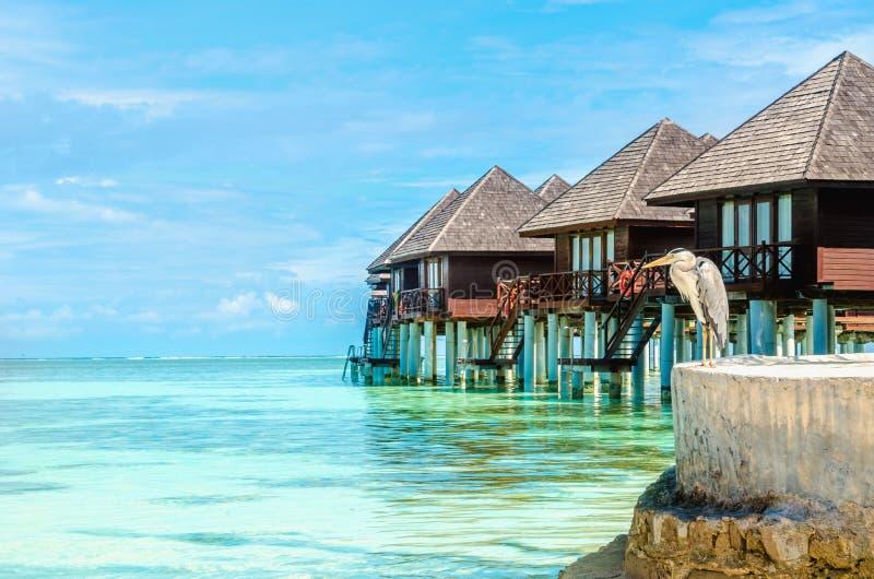 Airone e capanne di legno esotiche sull'acqua, Maldive fotografia stock libera da diritti