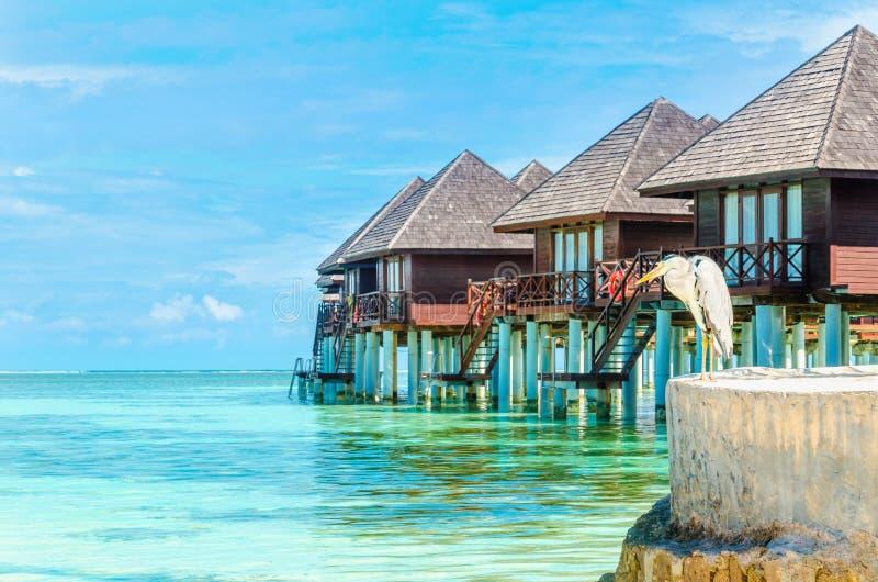 Airone e capanne sull'acqua, Maldive immagini stock