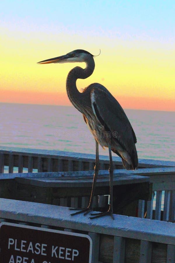 Airone Pier Panama City Beach Florida di tramonto tropicale immagini stock libere da diritti
