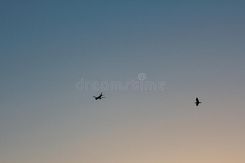 Download Airplaine and the bird stock photo. Image of power, bird - 42395256