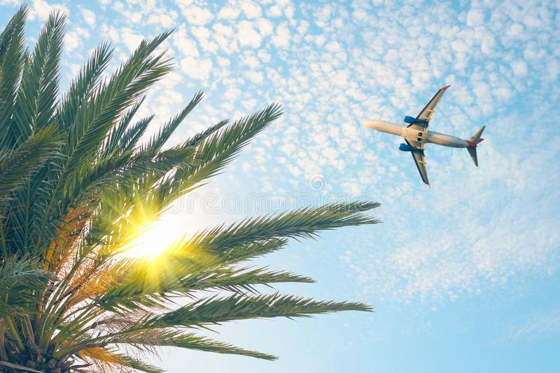 Airplane flying over tropical palm tree on cloudy sunset sky background. Summer. And travel concept royalty free stock image