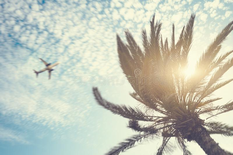 Airplane flying over tropical palm tree on cloudy sunset sky background. Summer and travel concept stock photos
