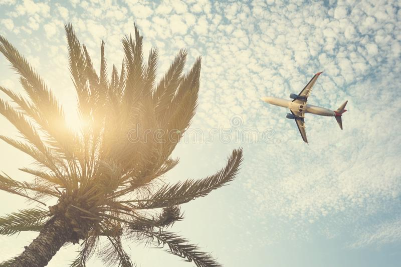 Airplane flying over tropical palm tree on cloudy sunset sky background. Summer and travel concept stock images