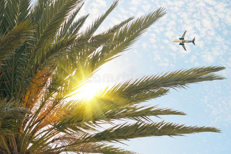 Airplane flying over tropical palm tree on cloudy sunset sky background. Summer and travel. Concept royalty free stock photo