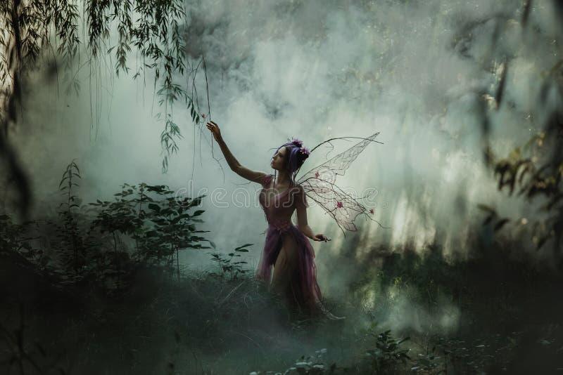 Airy Coquette die in de mist lopen stock afbeeldingen