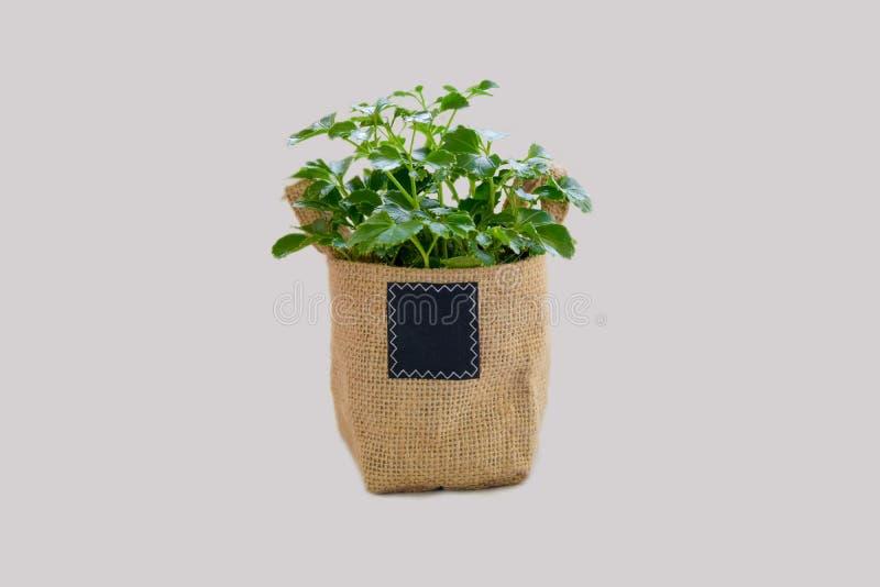 Aislante de la pequeña planta en bolso adornado foto de archivo