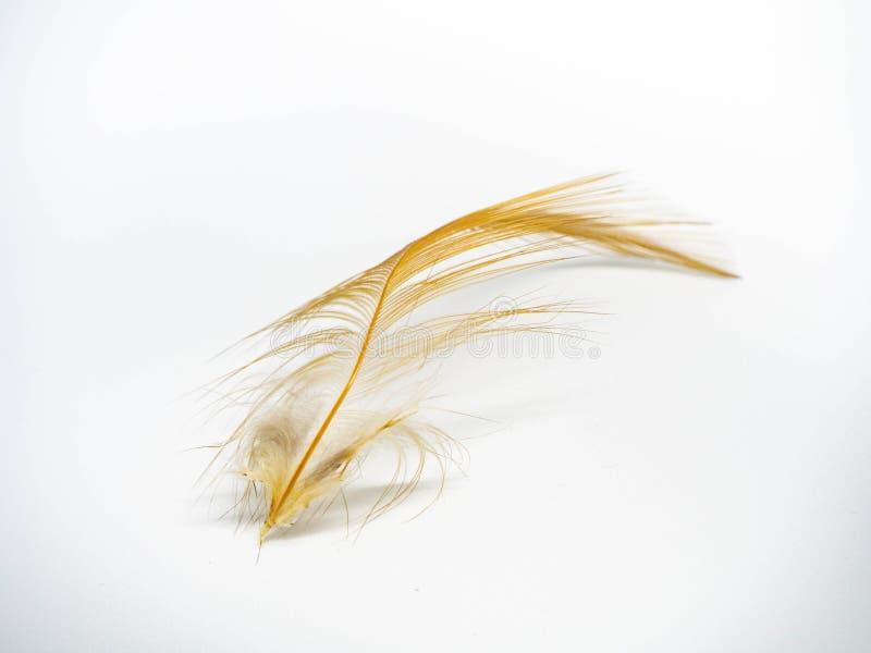 Aislante del plumero de la pluma en el fondo blanco imagen de archivo