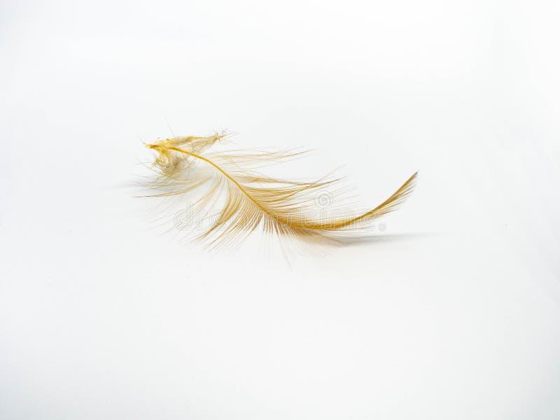 Aislante del plumero de la pluma en el fondo blanco imagen de archivo libre de regalías