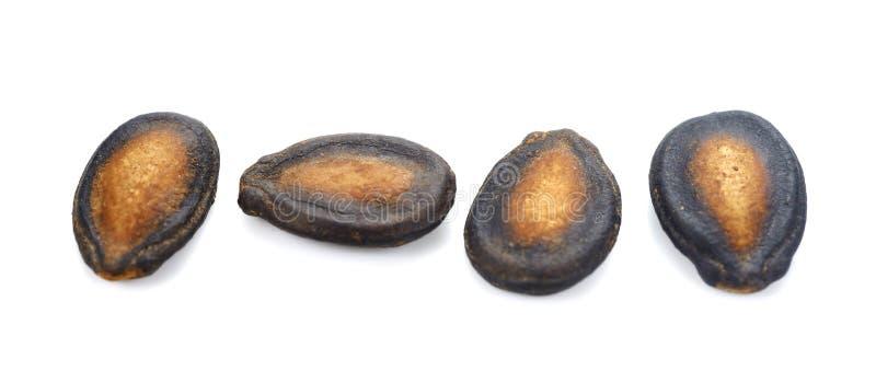 Aislante seco de la semilla de la sandía en el fondo blanco foto de archivo