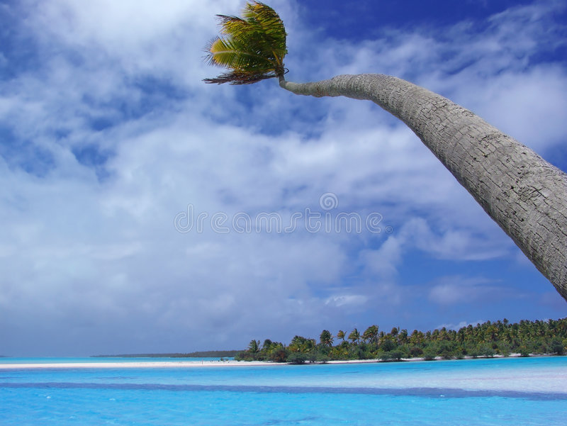 Download Aitutaki dłoni obraz stock. Obraz złożonej z kucharz, drzewo - 128157