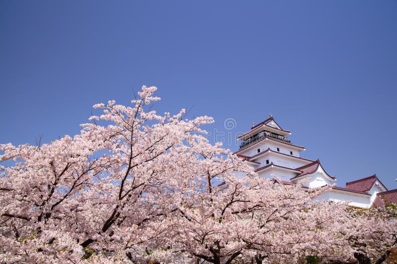Download Aizuwakamatsu Castle And Cherry Blossom Royalty Free Stock Photos - Image: 26455398