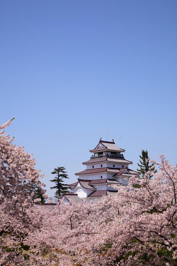 Aizuwakamatsu slott och körsbärsröd blomning arkivbild