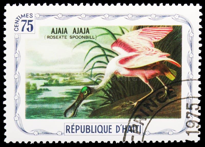 Ajala ajala, ptaka seria około 1975, (Roseate spoonbill) fotografia stock