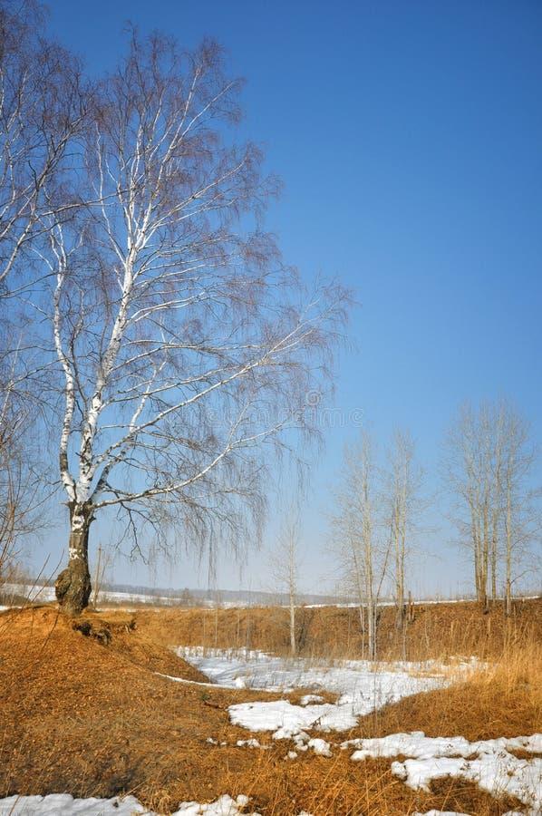 Ajardine bajo el cielo nublado azul en un día asoleado imagenes de archivo