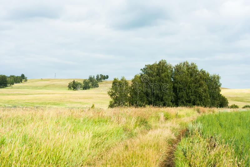 Ajardine com as árvores raras nos montes, estrada que conduz nos campos imagens de stock royalty free