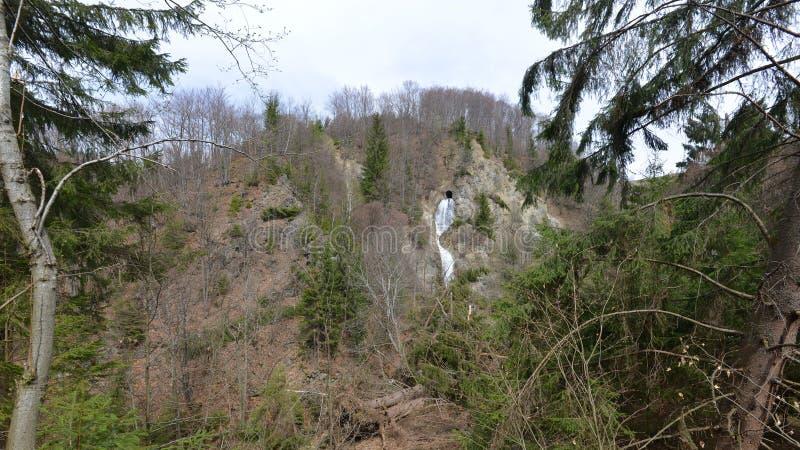 Ajardine com a cachoeira de Piciorul Calului em Cavnic, Romênia fotografia de stock