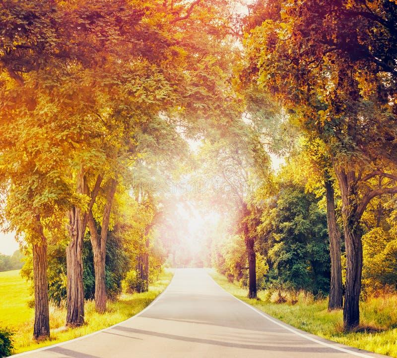 Ajardine com estrada secundária, as árvores do outono e luz solar asfaltadas imagem de stock