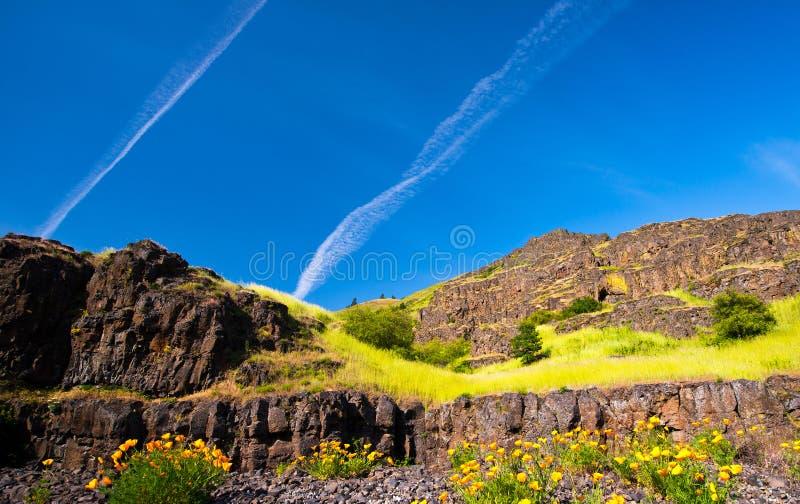 Ajardine com flores e grama nas rochas fotos de stock royalty free