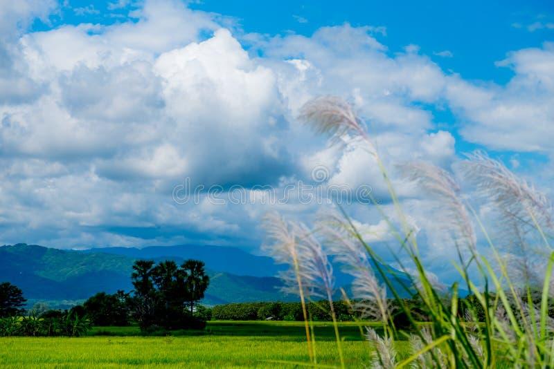 Ajardine com nuvens bonitas e Mountain View com fi verde imagem de stock