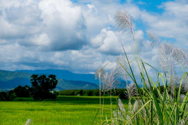 Ajardine com nuvens bonitas e Mountain View com fi verde foto de stock royalty free