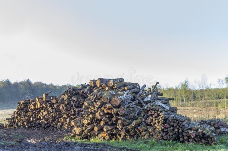 Ajardine com o grande Woodpile velho na floresta do verão imagem de stock royalty free