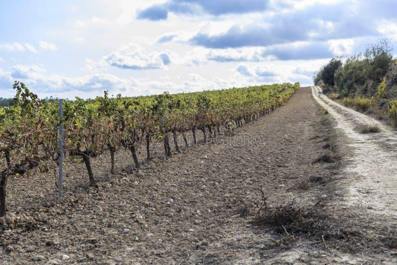 Ajardine com os vinhedos em Penedes, região oca do vinho, Vilafranca imagem de stock royalty free
