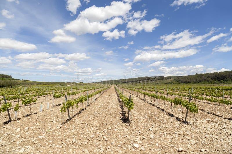 Ajardine com os vinhedos na área do vinho de Penedes, Catalonia, Espanha imagens de stock
