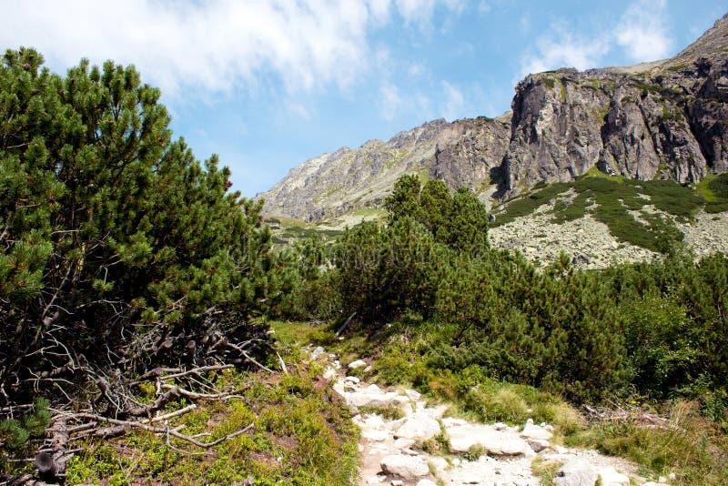Ajardine con árboles de pino y un paseo de la montaña fotografía de archivo