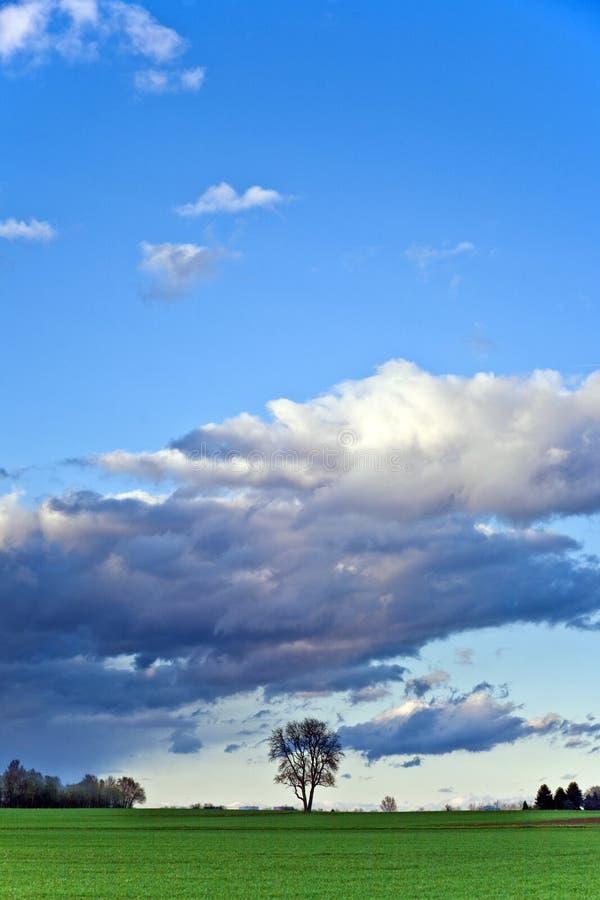 Ajardine con acres, árboles y nubes oscuras fotografía de archivo