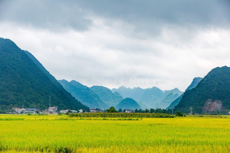Ajardine con arroz de arroz en Bac Son, Lang Son imagenes de archivo