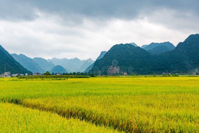Ajardine con arroz de arroz en Bac Son, Lang Son foto de archivo