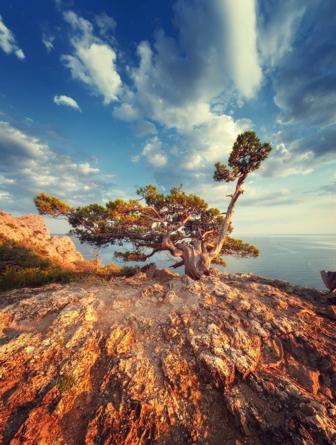 Ajardine con el árbol hermoso en la montaña, el cielo azul y el mar en la salida del sol fotografía de archivo