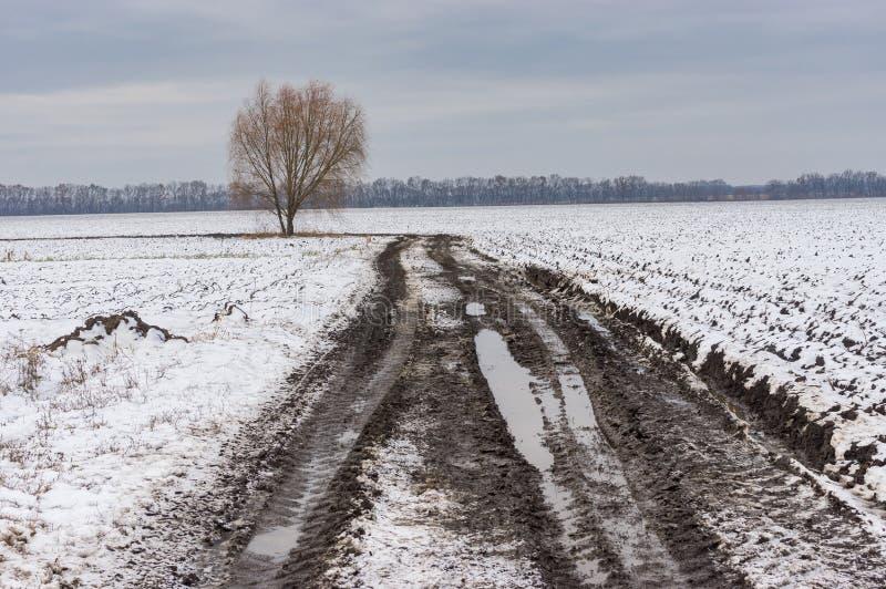 Ajardine con el árbol solo en el borde de la carretera de la carretera nacional al lado de campo agrícola en Ucrania foto de archivo libre de regalías