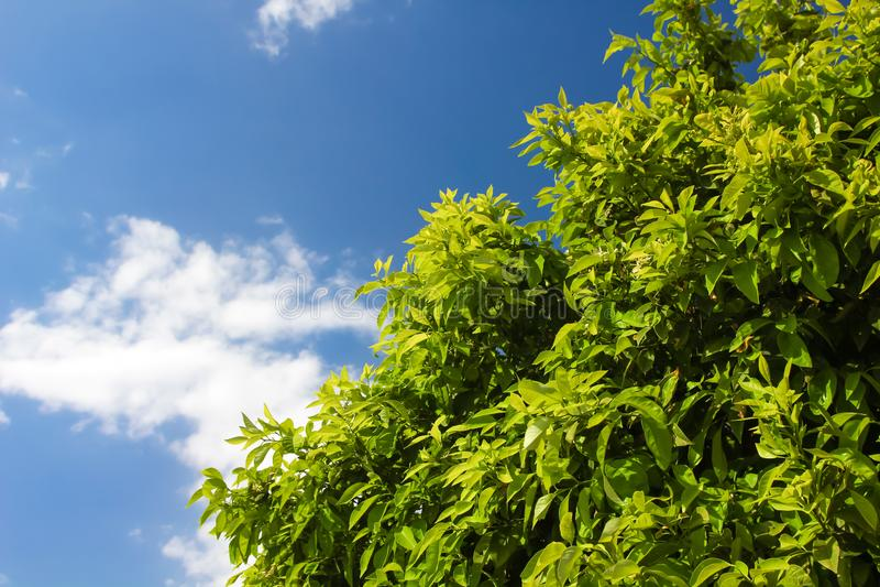 Ajardine con el arbusto y las nubes verdes en el cielo imagen de archivo libre de regalías