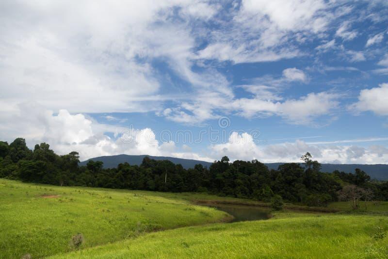Ajardine con el campo verde, bosque, montañas fotos de archivo