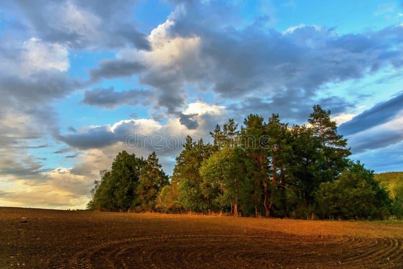 Ajardine con el campo y los árboles arados en puesta del sol imagen de archivo