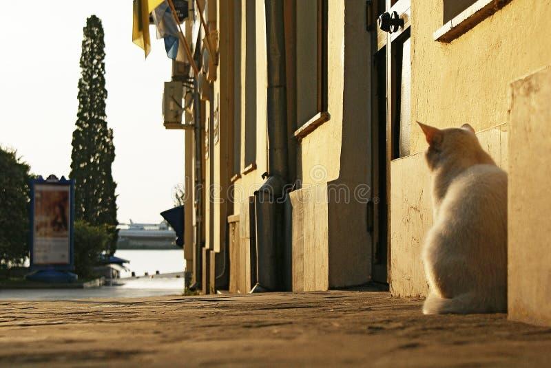 Ajardine con el gato en la acera cerca de la pared del edificio foto de archivo