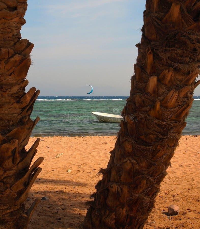 Ajardine con el marrón dos los troncos de árbol de las palmas datileras en el primero plano y el barco del kayserfer del fondo y  foto de archivo libre de regalías