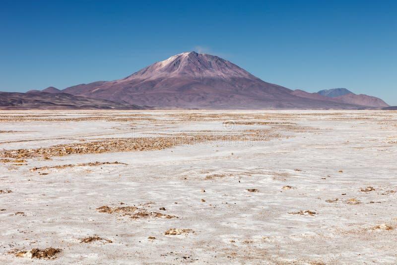 Ajardine con el volcán de Ollague en el fondo, en la frontera entre Bolivia y Chile fotografía de archivo libre de regalías