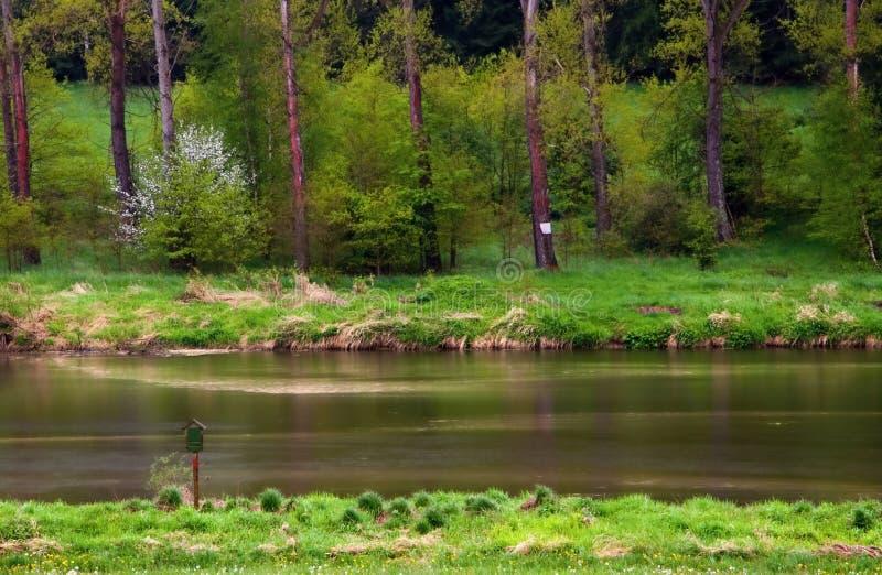 Ajardine con la superficie y los árboles del río en primavera temprana fotos de archivo