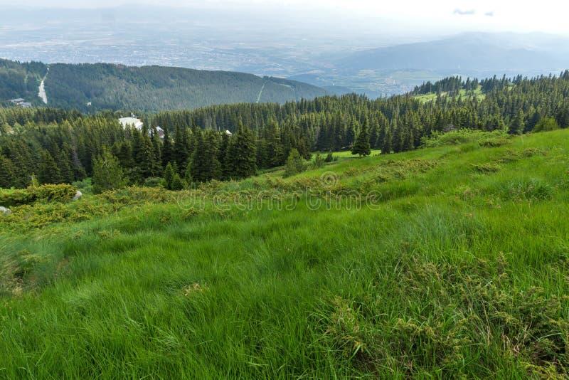 Ajardine con las colinas verdes en la montaña de Vitosha, Sofia City Region, Bulgaria imagenes de archivo