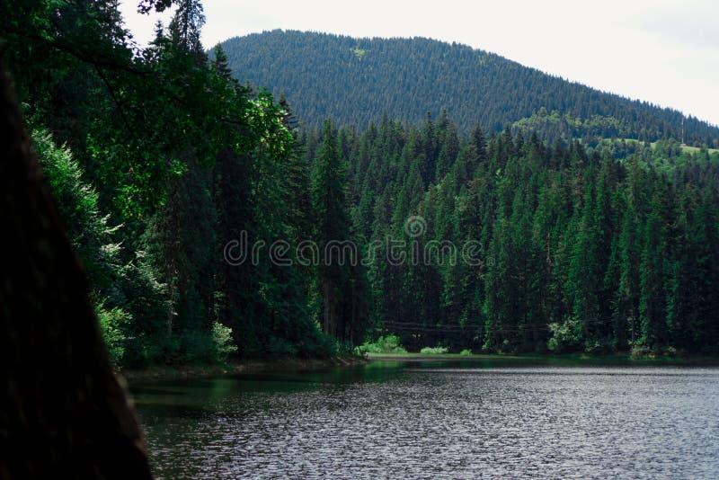 Ajardine con las monta?as, el bosque y un r?o en frente Paisaje hermoso fotografía de archivo libre de regalías
