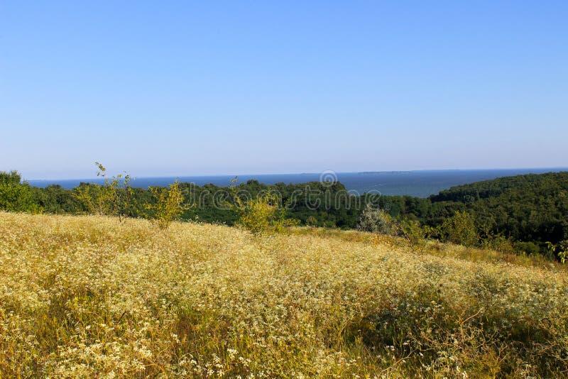Ajardine con los árboles, el prado, las colinas y el río fotos de archivo libres de regalías