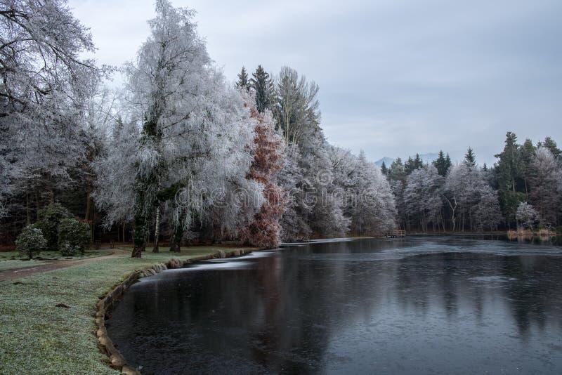 Ajardine con los árboles helados cerca del lago en una estación del otoño fotos de archivo